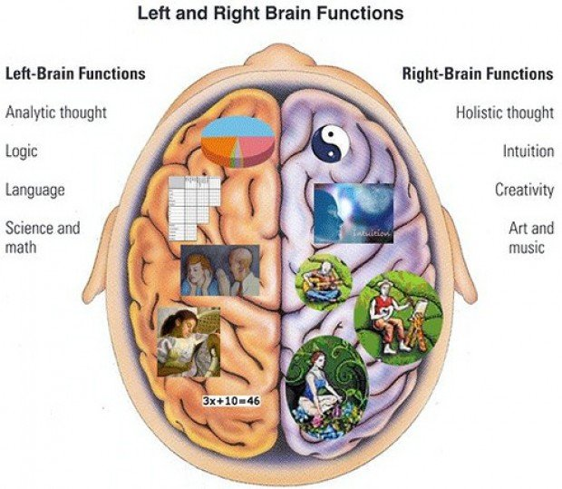 left brain and right brain Are you left-brain dominant or right-brain dominant some scientists say that specific personality traits can be attributed to your dominant brain hemisphere.