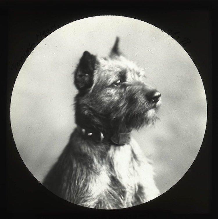 Victorian-Pics-4