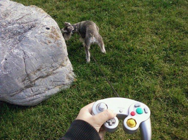 dog controller