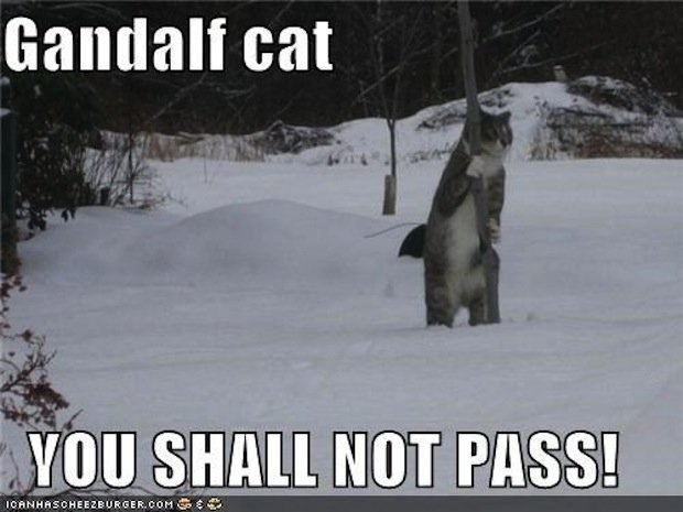 Gandalf Cat: You Shall Not Pass [Video]