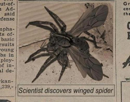 The Genius of the Flying Spider