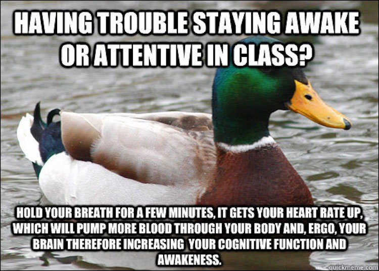 tips-from-the-worlds-smartest-duck-best-of-actual-advice-mallard-11