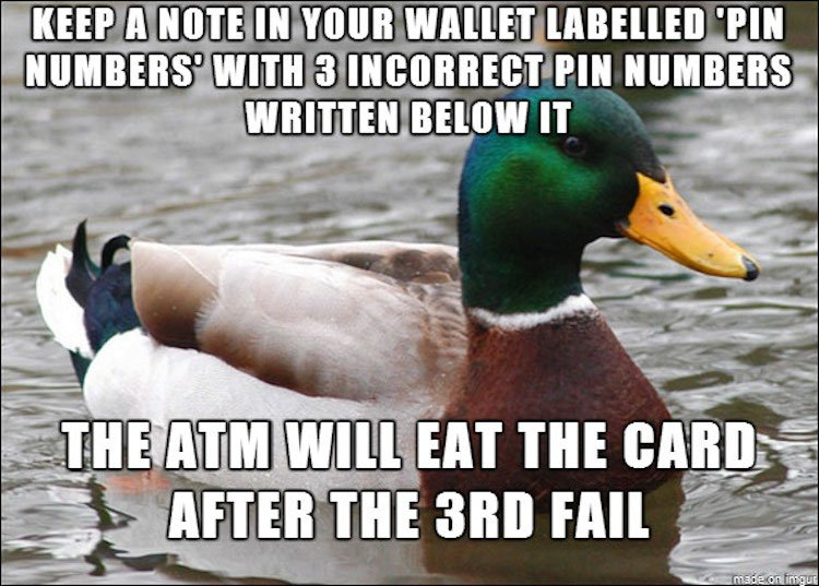 tips-from-the-worlds-smartest-duck-best-of-actual-advice-mallard-12