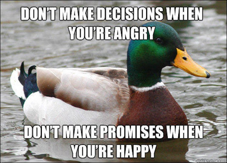 tips-from-the-worlds-smartest-duck-best-of-actual-advice-mallard-2