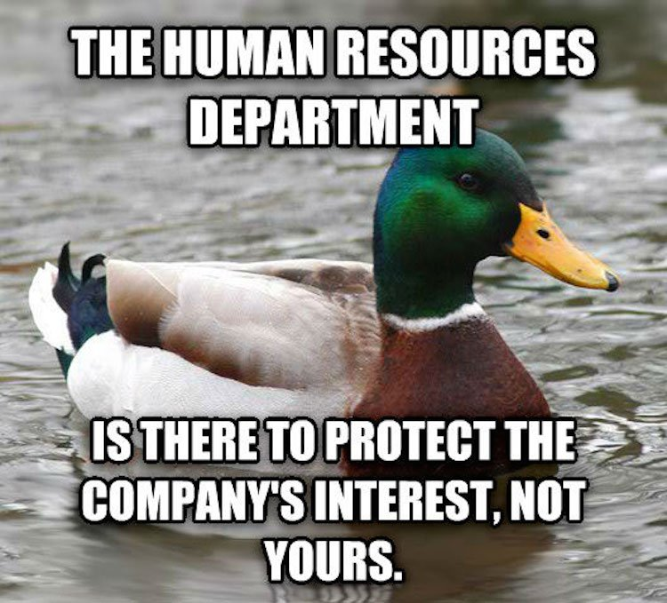 tips-from-the-worlds-smartest-duck-best-of-actual-advice-mallard-21