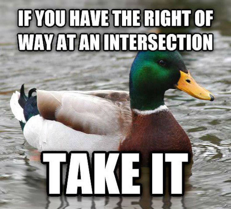 tips-from-the-worlds-smartest-duck-best-of-actual-advice-mallard-23