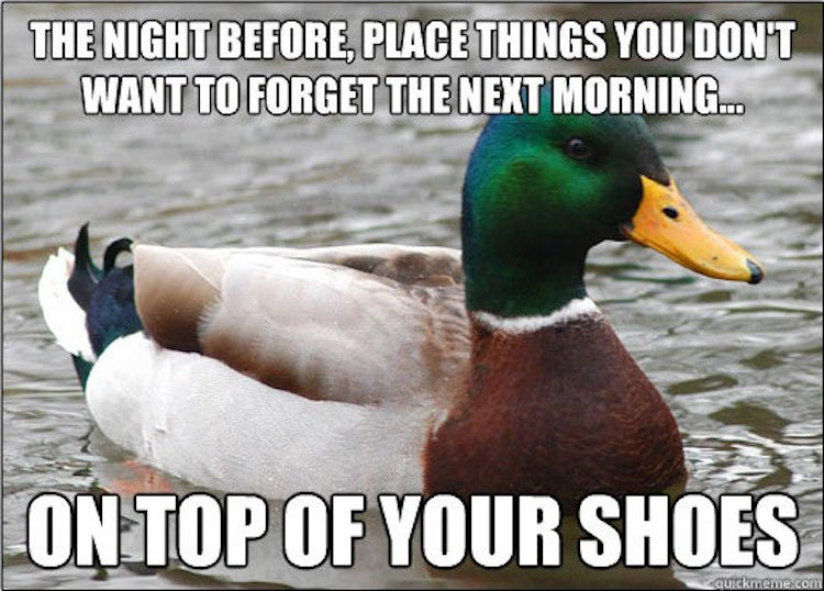 tips-from-the-worlds-smartest-duck-best-of-actual-advice-mallard-24
