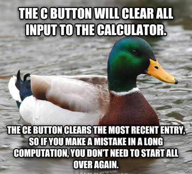tips-from-the-worlds-smartest-duck-best-of-actual-advice-mallard-3