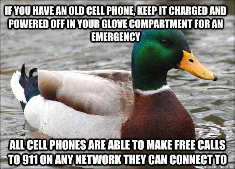 tips-from-the-worlds-smartest-duck-best-of-actual-advice-mallard-4