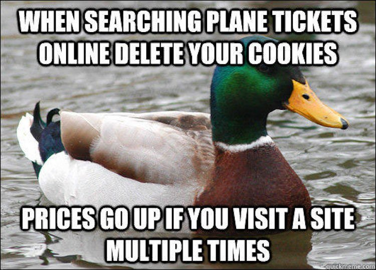 tips-from-the-worlds-smartest-duck-best-of-actual-advice-mallard-6
