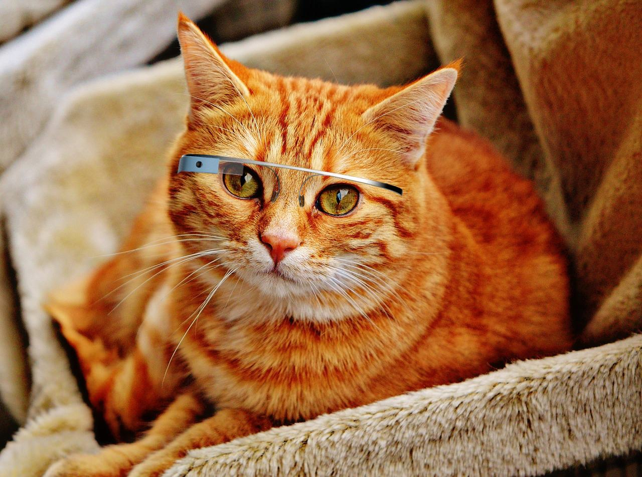 Google Glass – Now for Cats!
